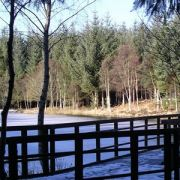 Woodland walk at Cambus O'May, Royal Deeside, Scotland